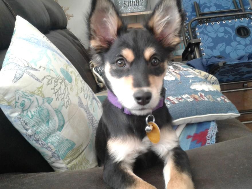 puppy of Sara E. James